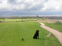 Dexter on 14th tee, Town behind, dunbar, finest courses