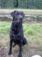 Lorne Smith's Dog, Dexter, Fine Golfer's Dogs, Finest Courses