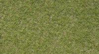 barenbrug fescue grass