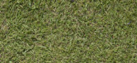 barenbrug browntop bent grass,