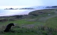 scaus rocks, cruden bay golf club, fine golf course review,