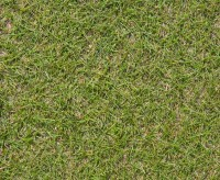 fescue browntop bent turf grass